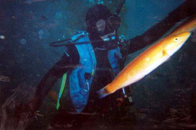 Ed underwater.