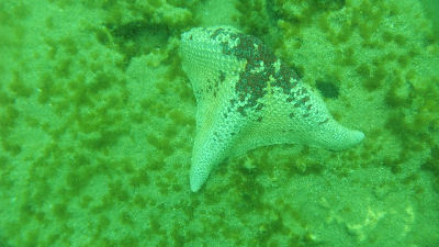 What is left of a starfish