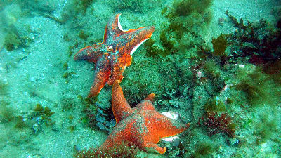 A starfish comforts his shriveling friend.