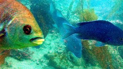 Fish photo-bomb.