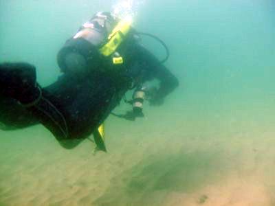Diving Terranea