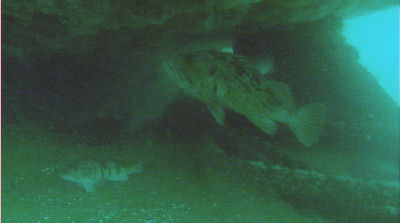 Fish  under the stern of the Ruby E.