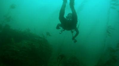 Following a diver.