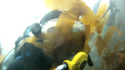 Through the kelp.