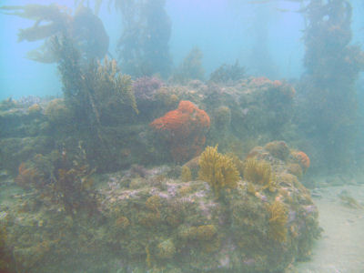 120 Reef