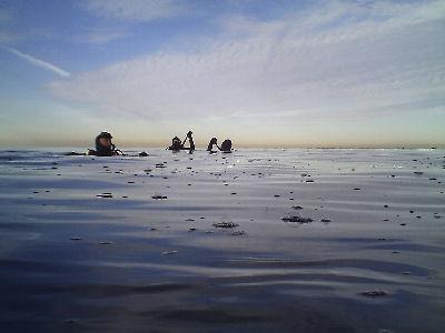 Macho divers off of Terranea Resort.