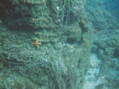 A reef at Terranea Resort.