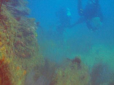 SCUBA Divers at Terranea Resort.