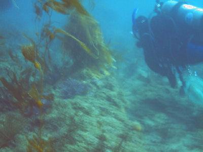 Reef at Terranea Resort.