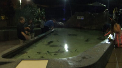 Shark petting zoo