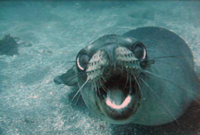 Sea Lion Attacks!