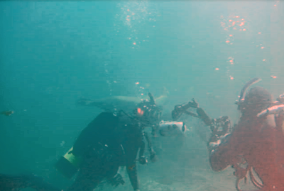The vicious Sea Lions photo bombed other divers.