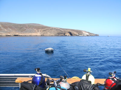 All divers made it back alive, so we headed to our next diving spot.