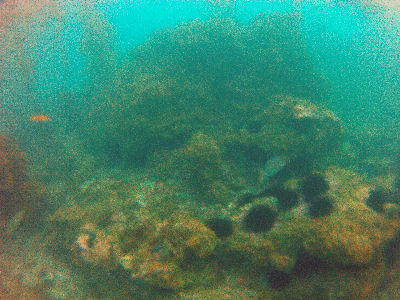 120 reef - Terranea Resort