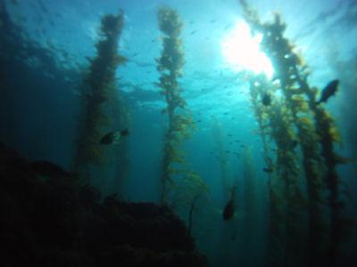 Terranea Resort Reef.