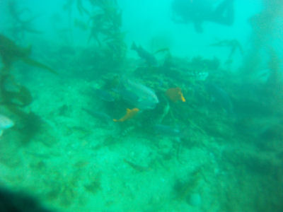 Diving off of Terranea Resort