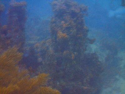 Reef.