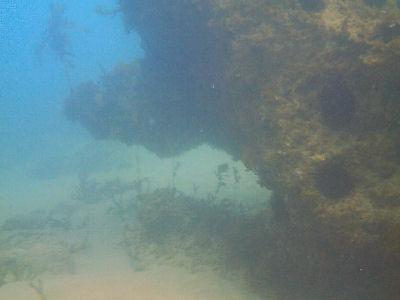 Iron reef.