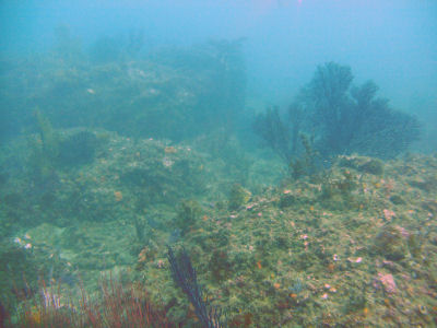 Reefs off of Terranea.