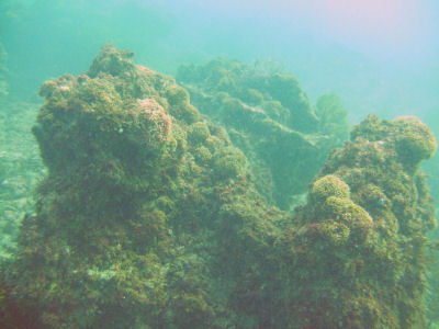 More Terranea reef.