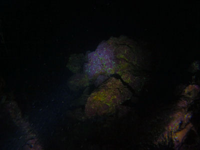 Night diving Sutil Island.