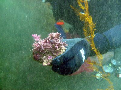 Reverend Al collects a perfect rock for his aquarium.