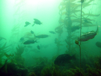 Fish are abundant at the 120 reef.