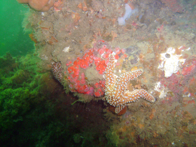 A starfish against a reef.
