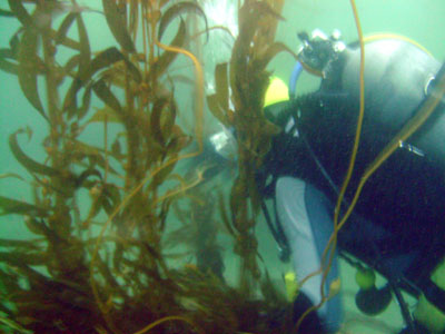 We weaved through the kelp forest.