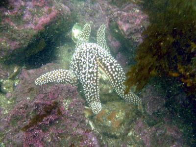 A starfish jiu-jitsus a rock.