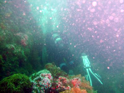 A diver squeezes between the Long Point Reef.