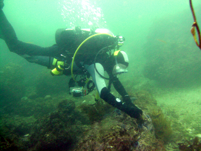 Chris examines part of the reef.