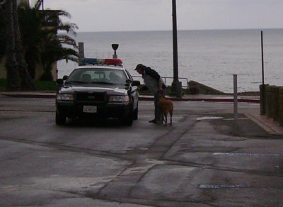 Dive Bum Don pays an instant cash fine to the Dog Police to keep Cyber the attack dog out of jail.