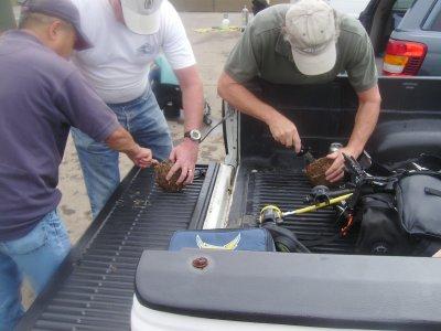Bob W. harvested some scallops for some sashimi.