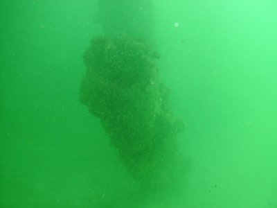 An old pier piling underneath the current pier.