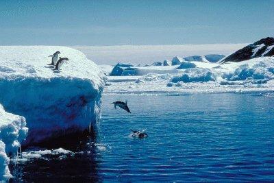 Antarctica SCUBA Diving