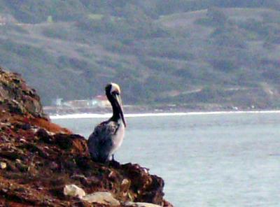 Even the pelicans stayed out of the water.