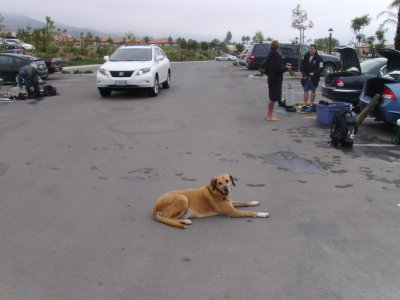 Cyber The Attack Dog blocked part of the parking lot so nobody would run over the grill or equipment.