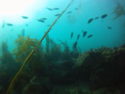 Diving Terranea.