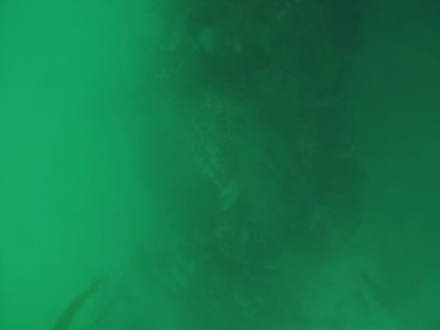 Visibility was OK;  I could see the bottom from 15 feet.