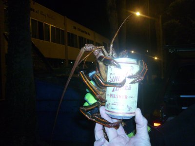 We usually offer the lobsters one last request before they are liberated; most ask for cigarettes, but we had one that requested beer.
