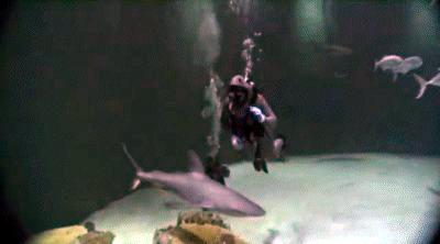 Diving Mandalay Bay Aquarium