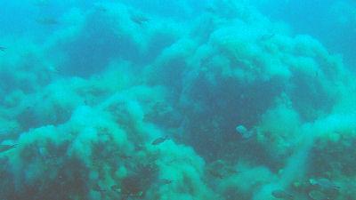 Monastery Beach Reef
