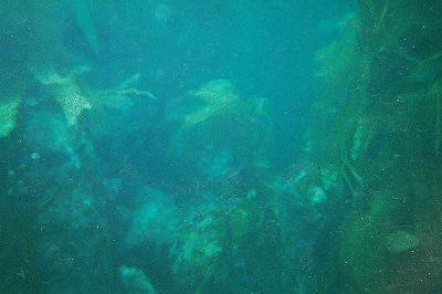 More kelp!