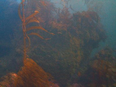 Terranea Reef.