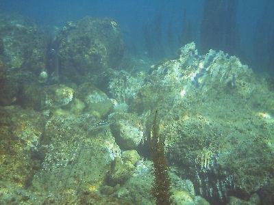 OML Reef.