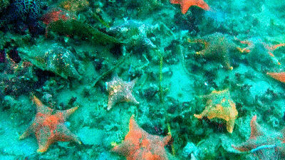 Star fish on a reef.