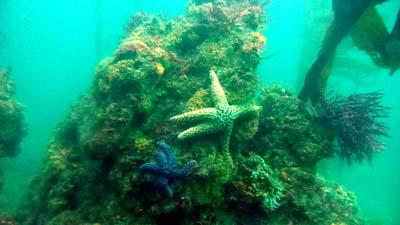 Terranea Reef