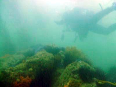 A SCUBA Diver tours 120 reef.