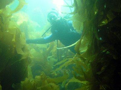 Nick in the kelp.